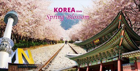 KOREA CHERRY BLOSSOM SONATA 5D
